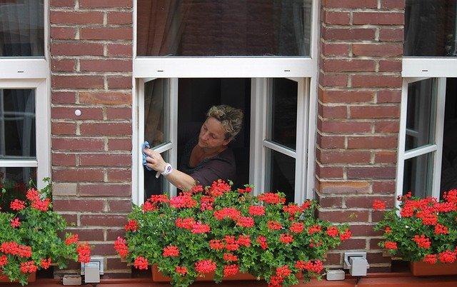 muškáty na oknech