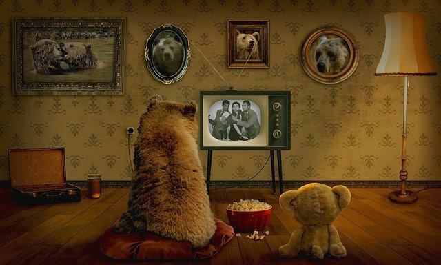 medvědi u tv
